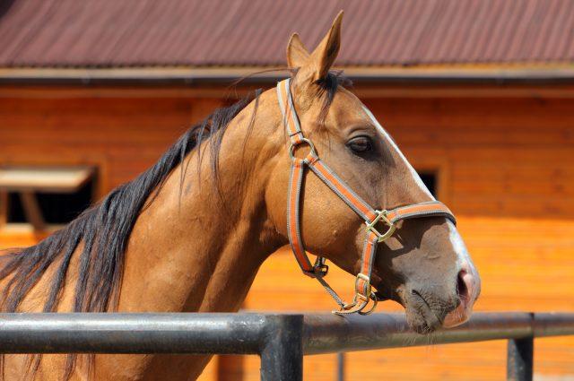Brown Horse on Farm