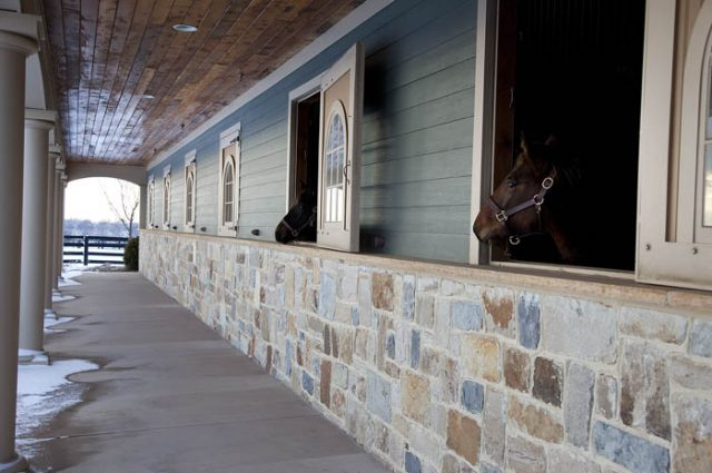 Horse Barn Horses Peaking Out