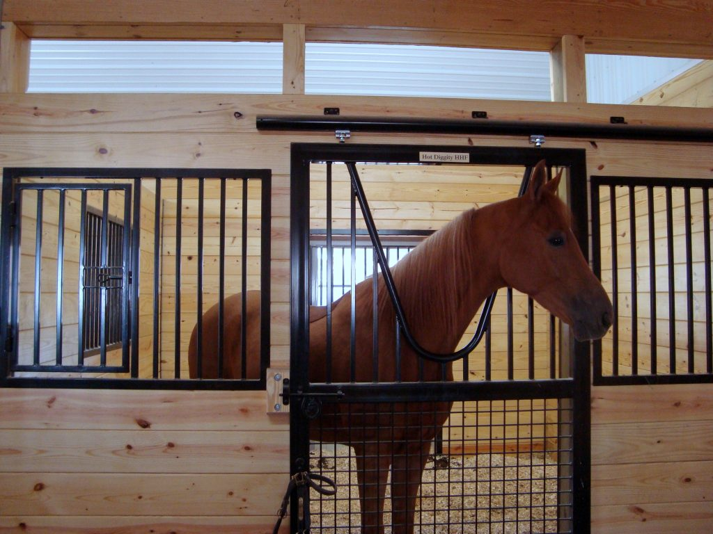 Horse in Stall by New Holland Supply