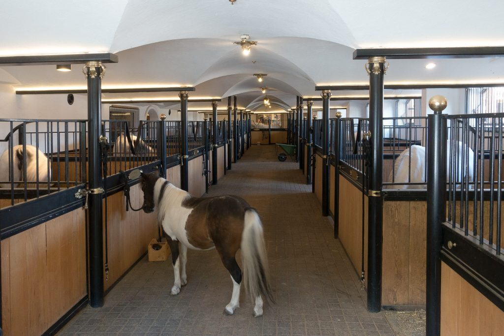 Affordable Horse Stall Materials