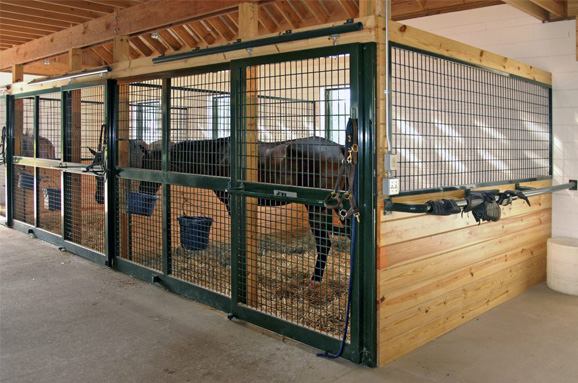 Horses in secure stall in horse barn